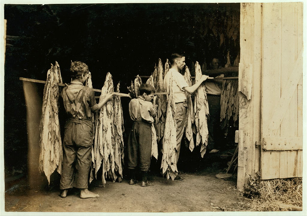 Housing tobacco in barn of W.L. Fugate. Will go to Schoolsville School but it has not opened on account of repairs. Lewis W. Hine. Hedges Station, Kentucky.