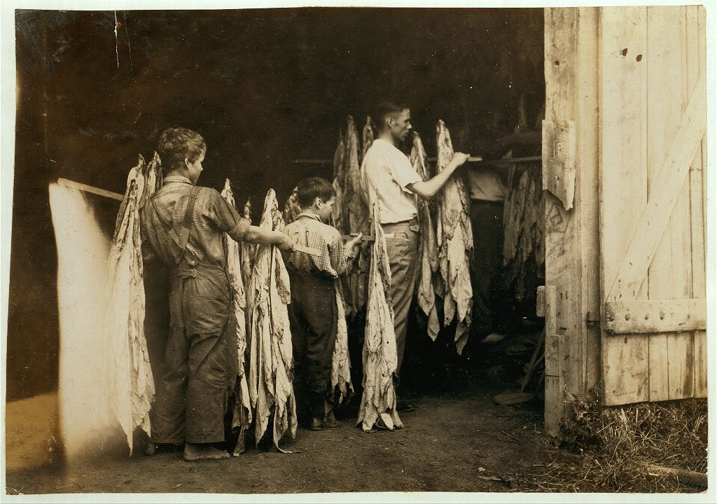 Housing tobacco in barn of W.L. Fugate. Will go to Schoolsville School but it has not opened on account of repairs. Lewis W. Hine.