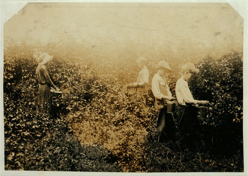 Newkirk children picking blackberries. Father, Hildred Newkirk. Willie, 15 years, Catherine 13 years, Clarence, 10 years and Sam, 8 ye Hine 1916