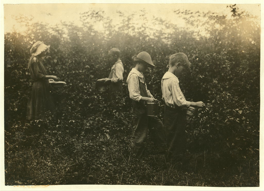 Newkirk children picking blackberries. Father, Hildred Newkirk. Willie, 15 years, Catherine 13 years, Clarence, 10 years and Sam, 8 years. 1916 hine