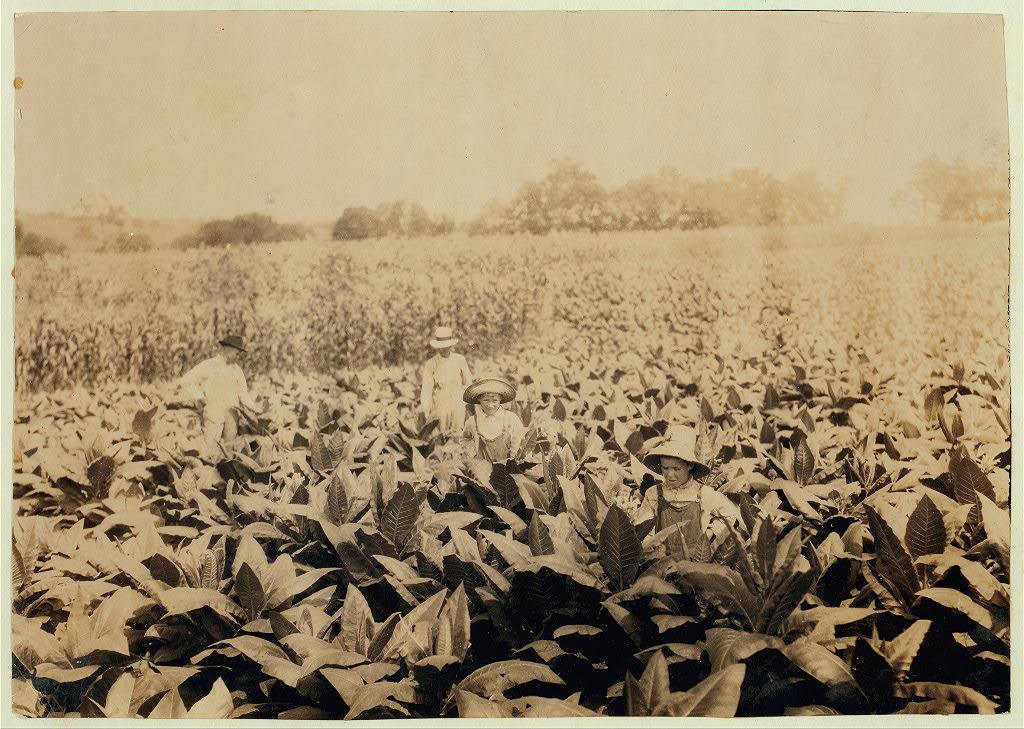 Worming and topping tobacco. W.L. Fugate rents farm. Willie, 12 years old and Ora, 10 years old will go to Schoolsville School, Clark Co., Ky., but it has not opened yet. Locati Lewis W. Hine.