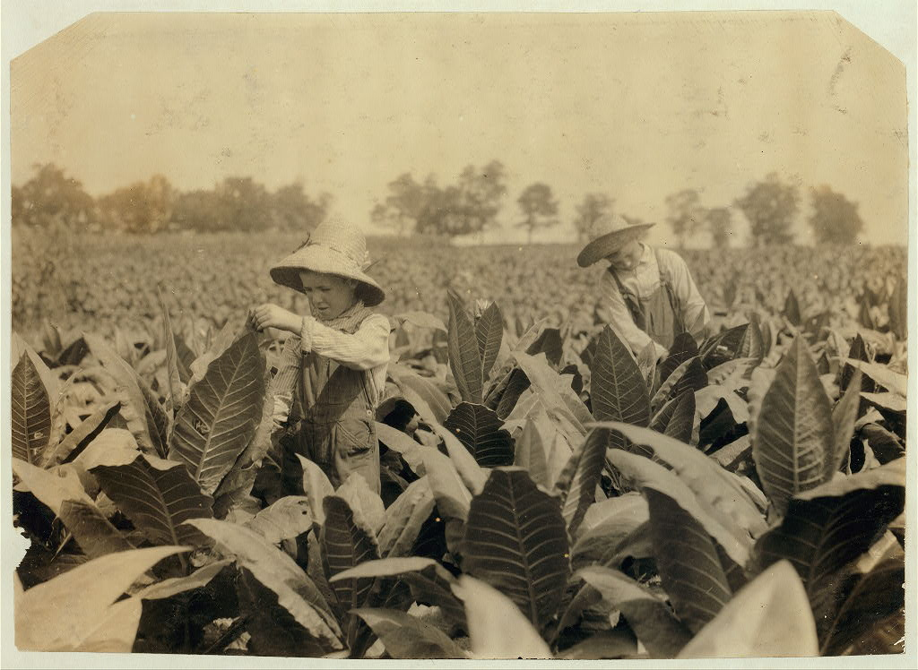 Worming and topping tobacco. W.L. Fugate rents farm. Willie, 12 years old and Ora, 10 years old will go to Schoolsville School, Clark Co., Ky., but it has not opened yet. hine 1916