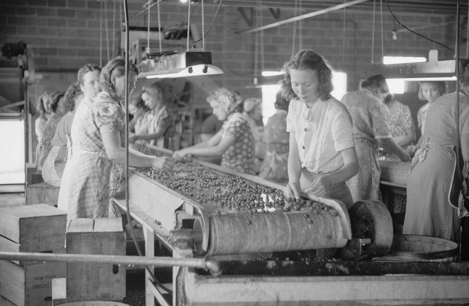 4Migrant girls working in cherry canning plant, Berrien County, Michigan 1940