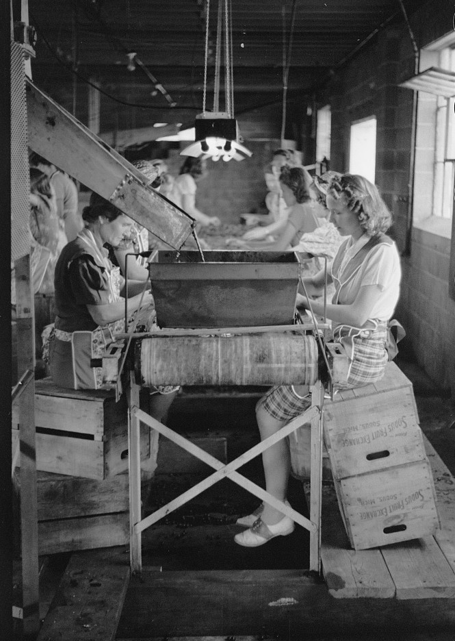 5 Migrant girls working in cherry canning plant, Berrien County, Michigan 1940