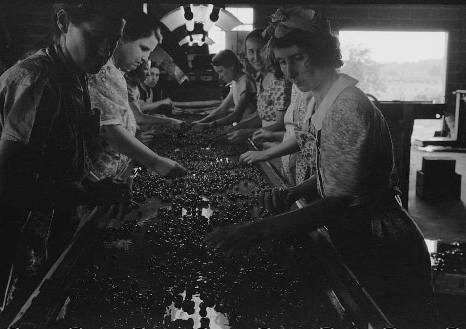 6Migrant girls working in cherry canning plant, Berrien County, Michigan