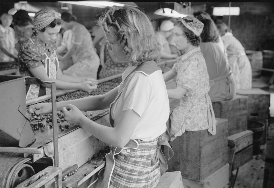7Migrant girls working in cherry canning plant, Berrien County, Michigan 1940