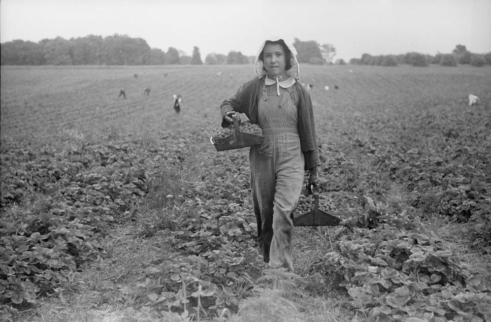 Migrant girl, strawberry picker, Berrien County, Michigan2 1940