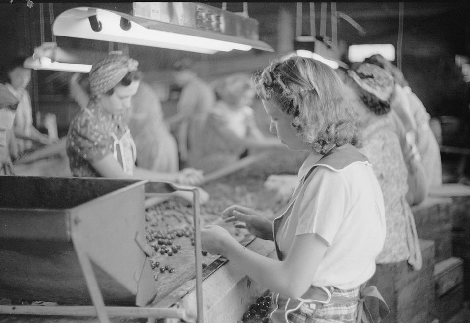 Migrant girls working in cherry canning plant, Berrien County, Mich 1940