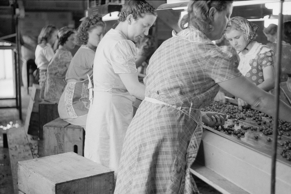 Migrant girls working in cherry canning plant, Berrien County, Mich2 1940