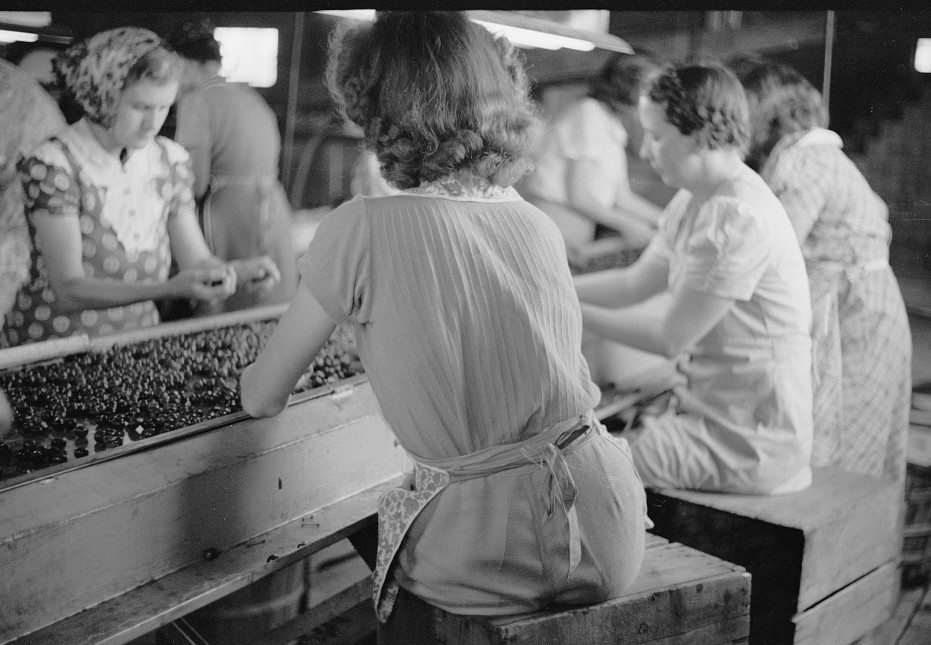Migrant girls working in cherry canning plant, Berrien County, Michigan 1940