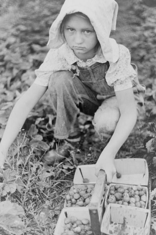Migrant strawberry picker, Berrien County, Michigan 1940