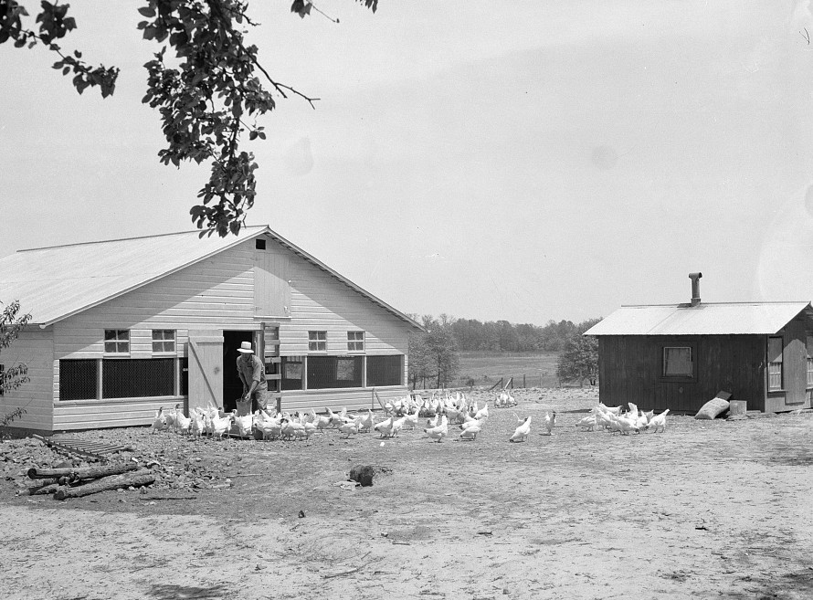 Rehabilitation client and laying house built with rehabilitation funds. Dent County, Missouri by Carl Mydans May 1936