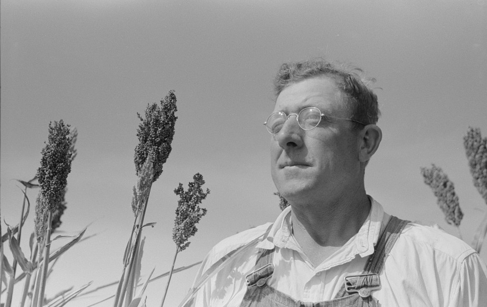 William Rall, FSA (Farm Security Administration) client standing amidst kaffir corn on his farm in Sheridan County, Kansas russell lee 1939