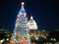 Did you know these Christmas Tree facts?
