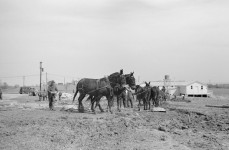 Greenhills, Ohio, Mules, tractors and shovels moved the earth for new homesite in 1936