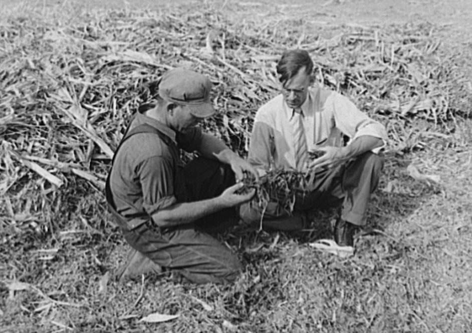 FSA (Farm Security Administration) supervisor and farmer-client examining quality of silage from trench silo. Sheridan County, Kansas russell lee 1939