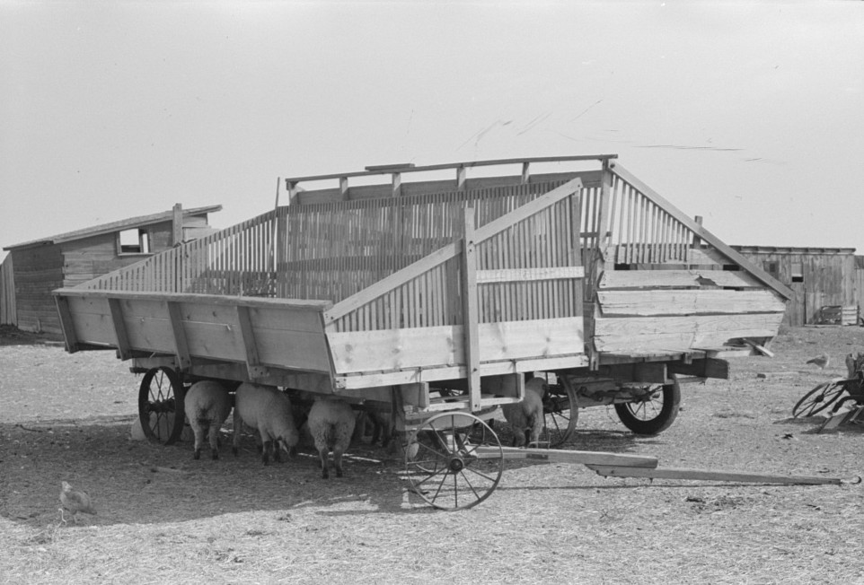 Hay wagons on farm in Sheridan County, Kansas russell lee 1939