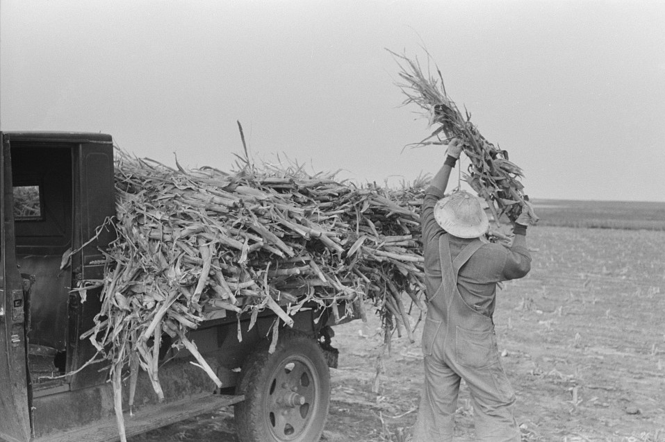 Loading corn cut for fodder, Sheridan County, Kansas russell lee 1939