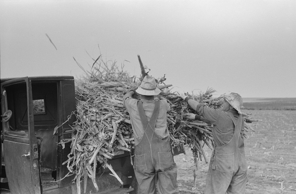 Loading corn cut for fodder, Sheridan County, Kansas russell lee 21939