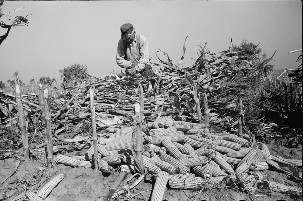 Shucking corn, Greenhills, Ohio October 1939 by photographer John Vachon
