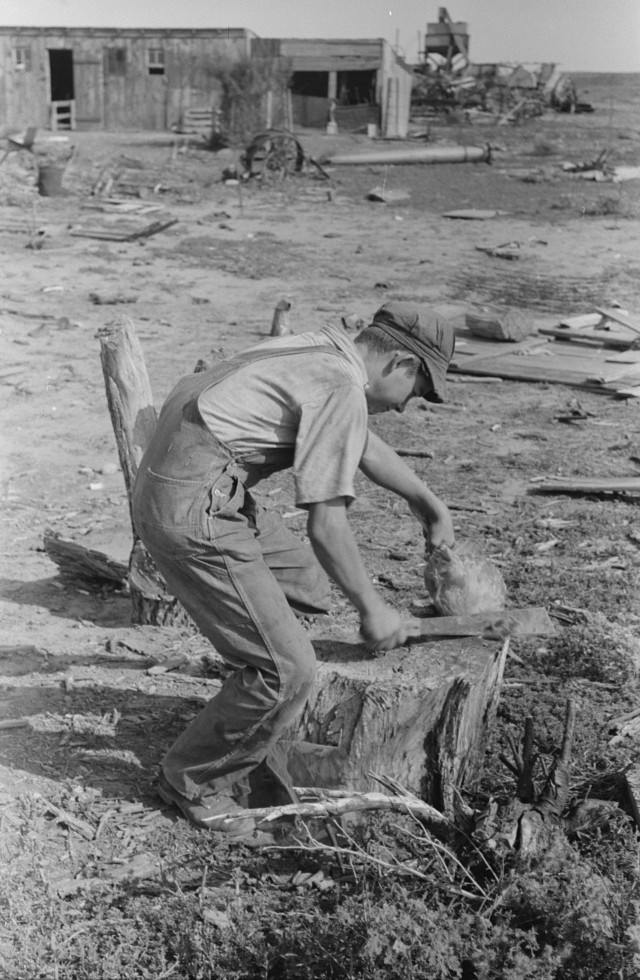 Son of Mr. Germeroth, FSA (Farm Security Administration) client, getting ready to cut off chicken's head, Sheridan County, Kansas russell Lee 1939