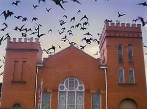 bats-roaring-out-of-the-belfry